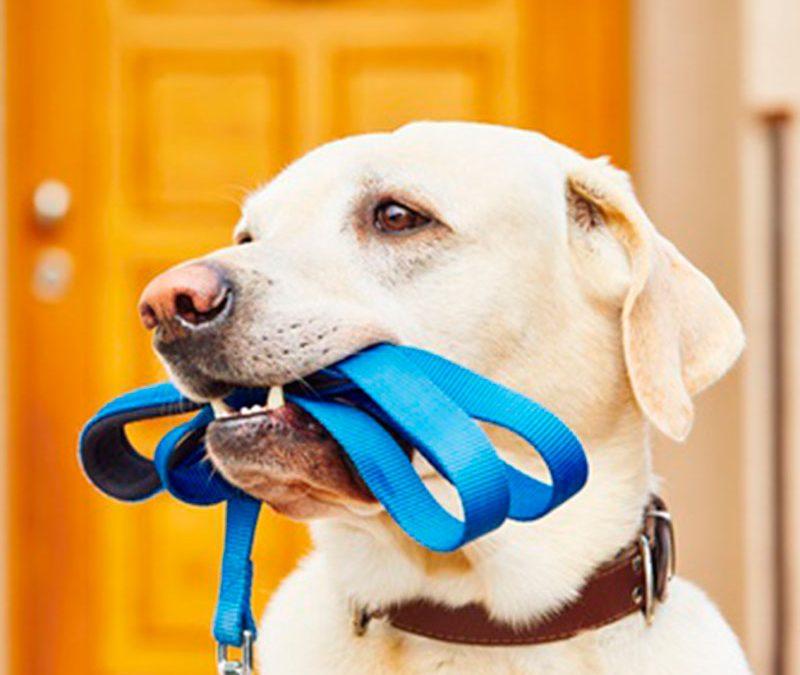 Material - Perro mordiendo la correa