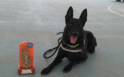 2º Campeonato de perros detectores de la Policía Local Celebrado en Orihuela.
